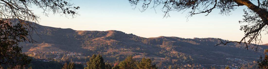 Save The Richmond Hills